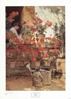 Geraniums Fine-Art Print