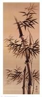 Bamboo Forever I I Fine-Art Print