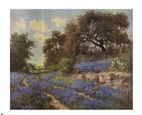 Blue Bonnet Trail Fine-Art Print