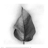 Aspen Leaf in Snow Fine-Art Print