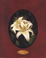 The Lily I Fine-Art Print