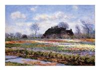 Tulip Fields at Sassenheim Fine-Art Print