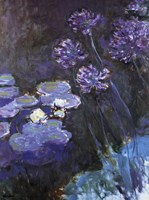 Waterlillies and Agapanthus Fine-Art Print