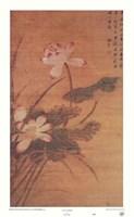 Lotus Flowers Fine-Art Print