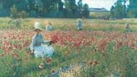 In Flanders Fields Fine-Art Print