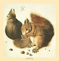 Squirrels Fine-Art Print