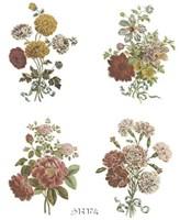 Florals (Set of Four) Fine-Art Print