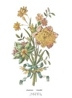 Anemones Jonquilles Fine-Art Print