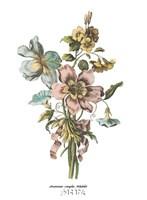 Anemones Simples Volubilis Fine-Art Print