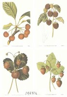 Berries (Set of Four) Fine-Art Print