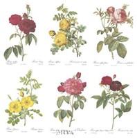 Roses (Set of Six) Fine-Art Print
