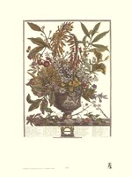 January/Twelve Months of Flowers, 1730 Fine-Art Print