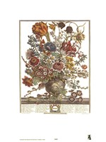 March/Twelve Months of Flowers, 1730 Fine-Art Print