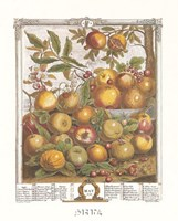 May/Twelve Months of Fruits, 1732 Fine-Art Print