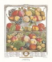September/Twelve Months of Fruits, 1732 Fine-Art Print