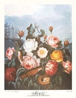 A Group of Roses Fine-Art Print