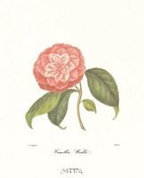 Camellia Wadu Fine-Art Print