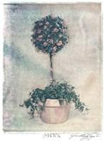 Pink Topiary Fine-Art Print