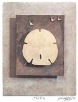 Seashell Study I Fine-Art Print
