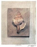 Seashell Study III Fine-Art Print