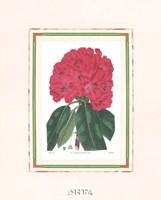 Rhododendron No. 1 Fine-Art Print