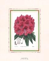 Rhododendron No. 2 Fine-Art Print