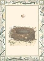 Woodland Nest II Fine-Art Print
