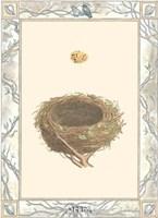 Woodland Nest IV Fine-Art Print