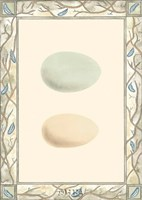 Antique Eggs I Fine-Art Print