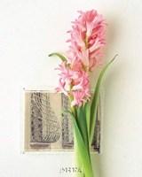Hyacinth, Euro-Floral Fine-Art Print
