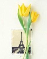 Tulip, Euro-Floral Fine-Art Print