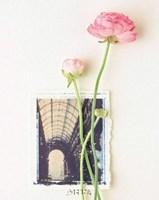 Peony, Euro-Floral Fine-Art Print