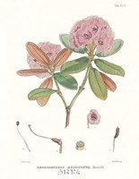 Aeruginosum Fine-Art Print