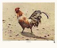 Banty Rooster Fine-Art Print