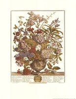 July/Twelve Months of Flowers, 1730 Fine-Art Print