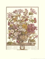 October/Twelve Months of Flowers, 1730 Fine-Art Print