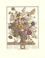 November/Twelve Months of Flowers, 1730 Fine-Art Print