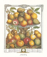 February/Twelve Months of Fruits, 1732 Fine-Art Print