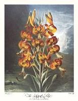The Superb Lily Fine-Art Print