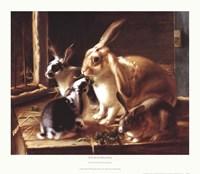 Curious Spectator Fine-Art Print