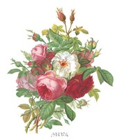 Antique Roses Fine-Art Print
