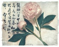 Oriental Peony Fine-Art Print