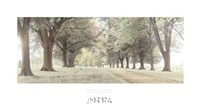 Avenue of Trees Fine-Art Print