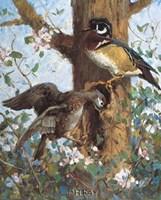 Spring (Wood Ducks) Fine-Art Print