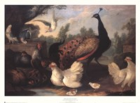 Barnyard with Chickens Fine-Art Print
