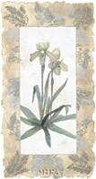 Elegant Orchid Fine-Art Print