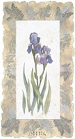 Emperor Iris Fine-Art Print