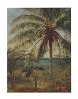 Palm Tree, Nassau Fine-Art Print