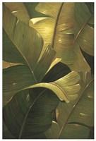 Amazon Canopy Fine-Art Print
