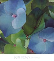 Hydrangeas Fine-Art Print